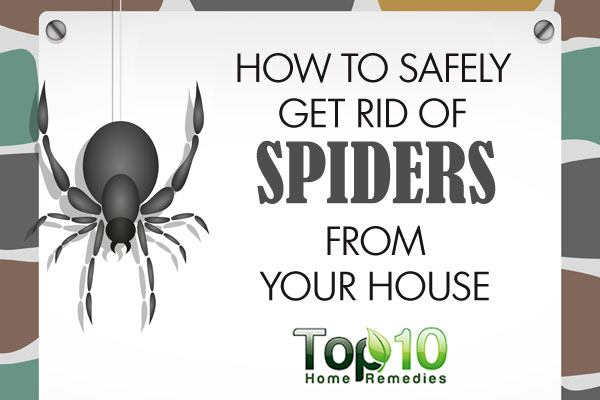 How To Safely Get Rid Of Spiders From Your House Top 48 Home Remedies Gorgeous How To Get Rid Of Spiders In Bedroom