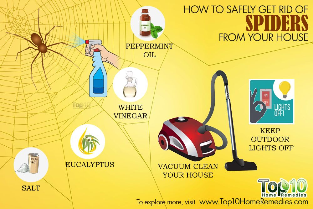 ... to Safely Get Rid of Spiders from Your House | Top 10 Home Remedies