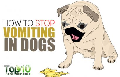 How to Stop Vomiting in Dogs