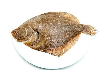 Steinbutt Fisch