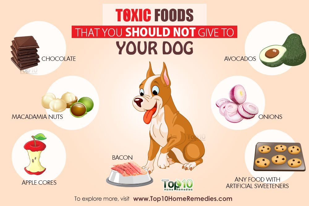 What Foods Should You Not Give A Dog