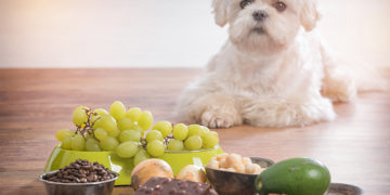10 Toxic foods that you should not give to your dog
