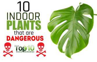 10 Indoor Plants that are Poisonous and Dangerous