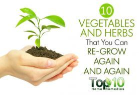 10 Vegetables and Herbs that You Can Regrow Again and Again from Kitchen Scraps