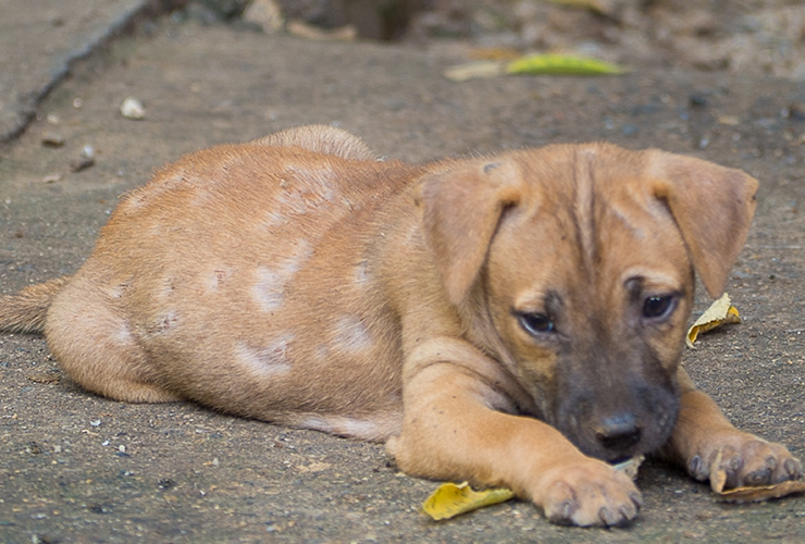Home Remedies For Dogs With Mange Top 10 Home Remedies