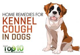 23 Home Remedies for Pets | HowStuffWorks