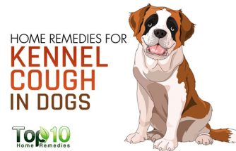 Home Remedies for Kennel Cough in Dogs