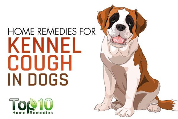 Kennel Cough Dogs Youtube