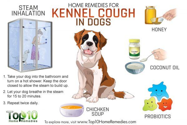 kennel cough home remedies