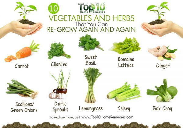 regrow vegetables and herbs from scratch