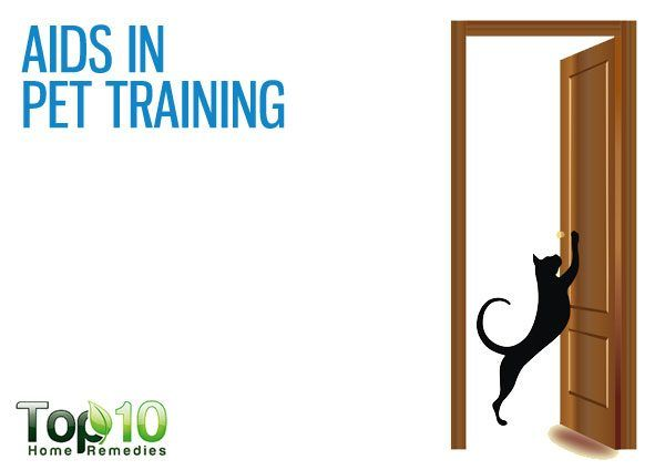 aids in pet training