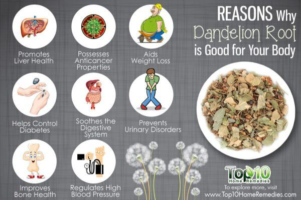 reasons why dandelion root is good for you