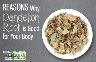 10 Reasons Why Dandelion Root is Good for Your Body