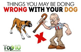 10 Things You May be Doing Wrong with Your Dog