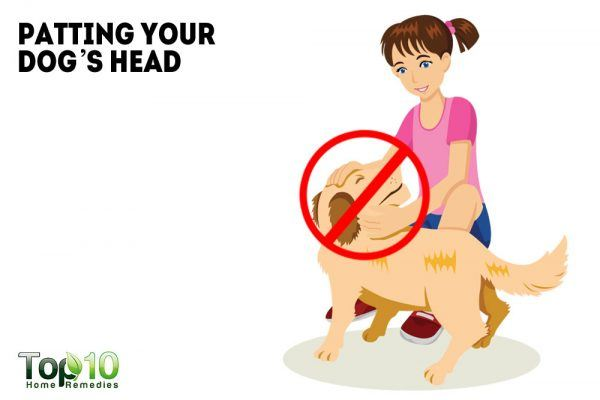 patting your dog's head