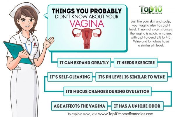 things you did not know about your vagina