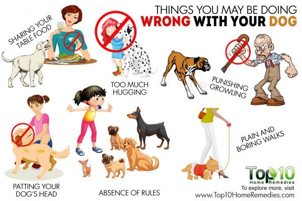 what you are doing wrong with your dog
