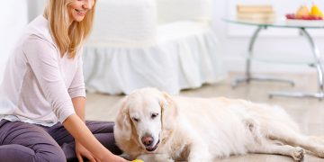 10 Incredible things your dog can sense about you