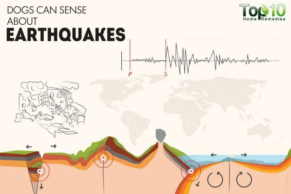 dogs can sense earthquakes