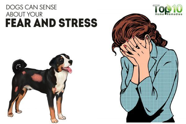 dogs can sense your fear and stress
