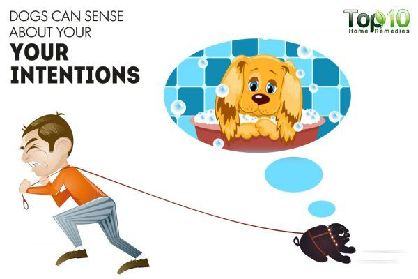 dogs can sense your emotions