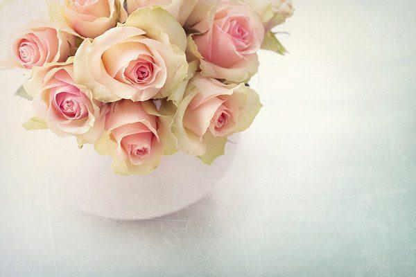 keeps flowers fresh