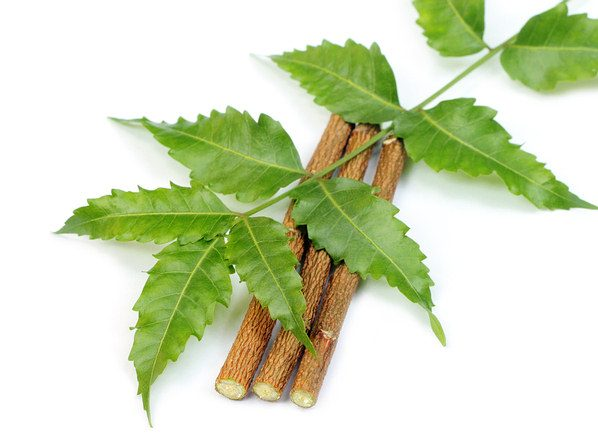 neem twigs chew sticks