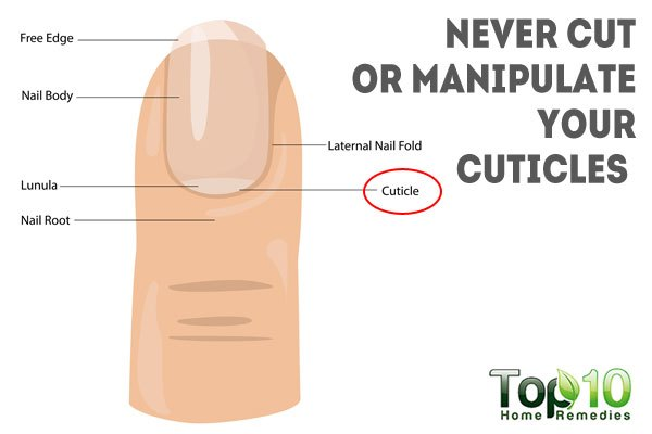 how to cut your own cuticles