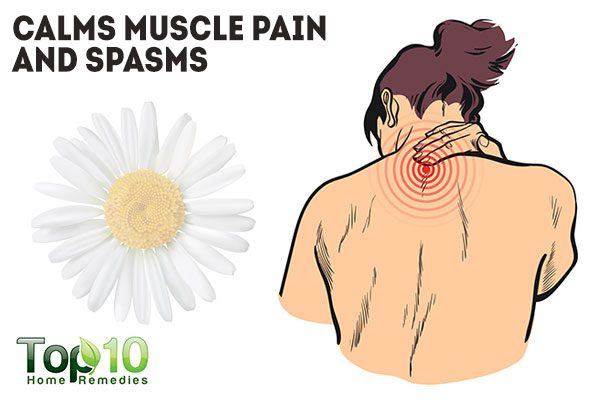 chamomile calms muscle pains and spasms