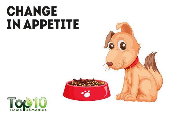 change in appetite in dog