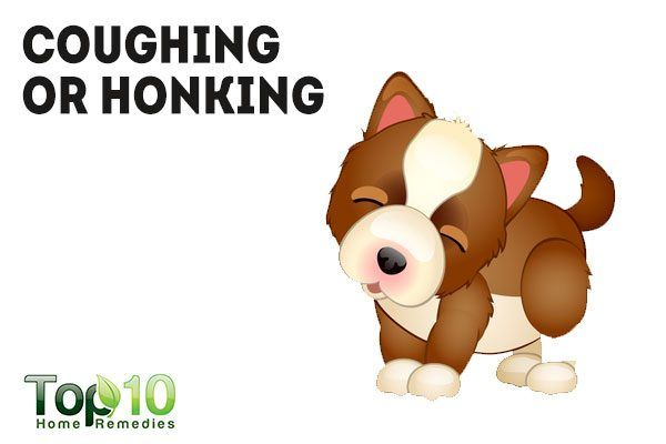 Stop that Barking Cough - Homeopathy Plus