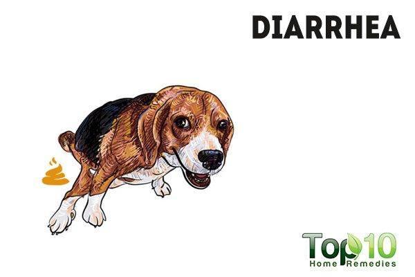 sick dog diarrhea