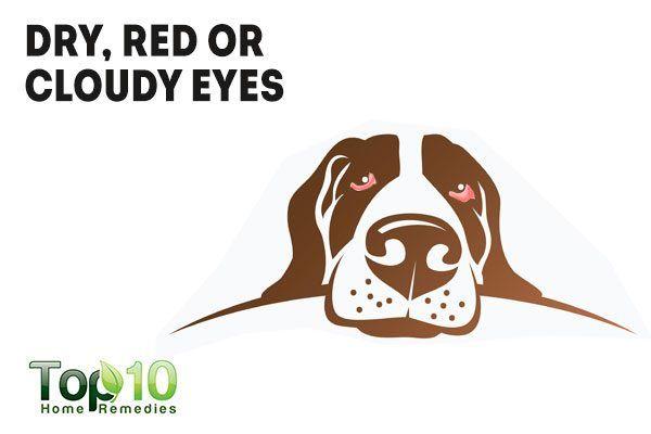 red eyes in dog