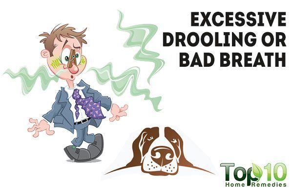 dog with bad breath