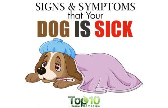 10 Signs and Symptoms that Your Dog is Sick