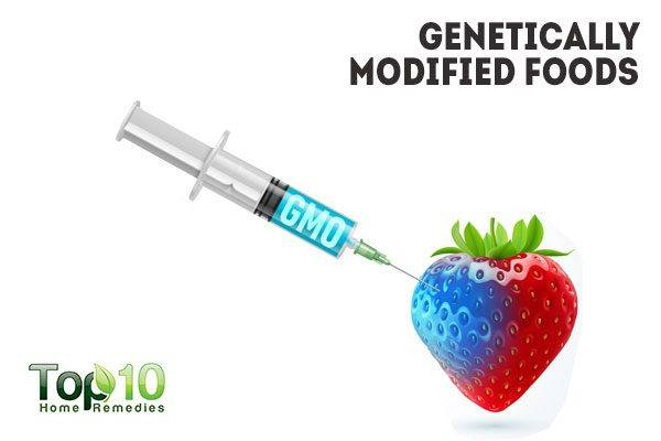 effect of genetic modified food The authors found that whole genes from our food can contributor to the genetic literacy project we know the placebo effect is biological is it also genetic.