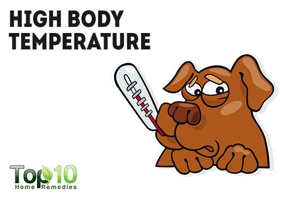 dog with high body temperature