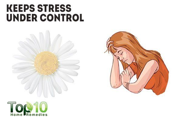 chamomile reduces stress and anxiety