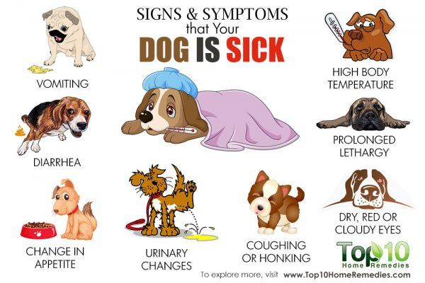 signs and symptoms that your dog is sick