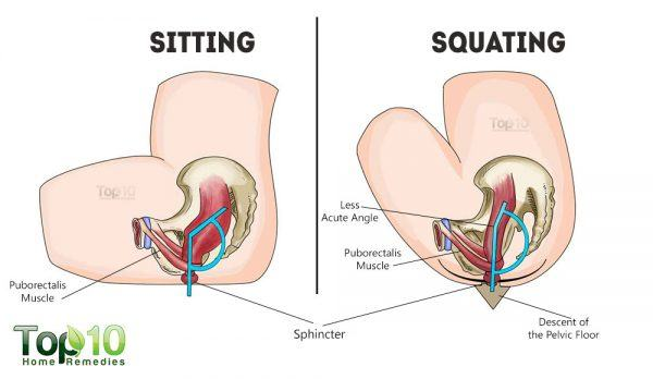 sitting vs squatting diagram