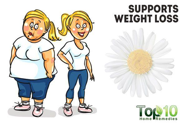 chamomile supports weight loss