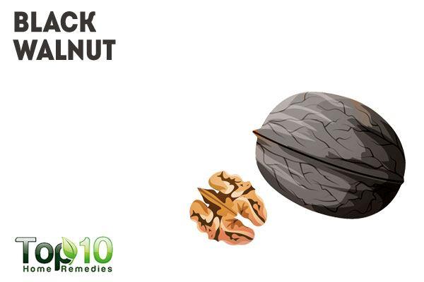 Black Walnut Dog Worms