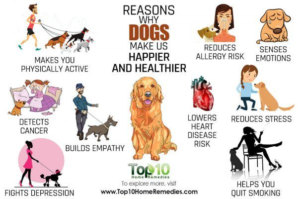 reasons why dogs make us healthier and happier