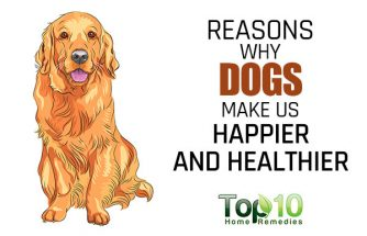 10 Reasons Why Dogs Make Us Happier and Healthier
