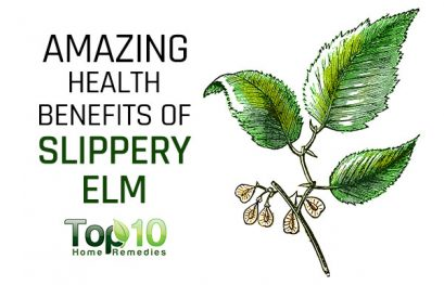 10 Amazing Health Benefits of Slippery Elm
