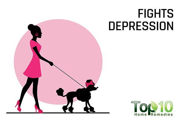 dogs fight depression