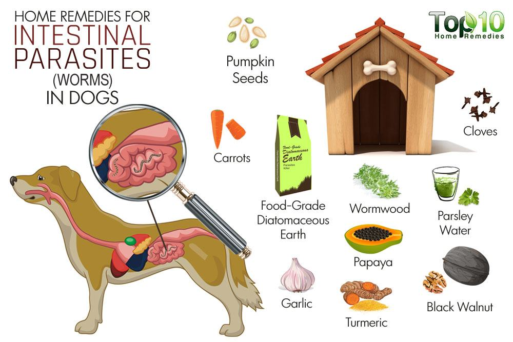 Home Remedies for Intestinal Parasites (Worms) in Dogs ...