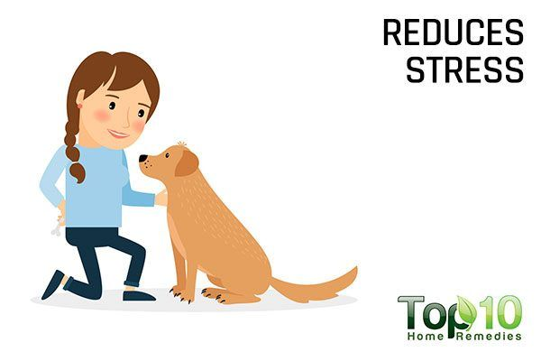 dogs reduce stress