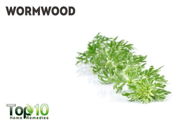 wormwood for dog intestinal worms