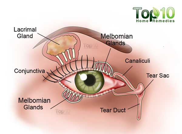 Diagram Of The Eye Tear Ducts Online Schematic Diagram